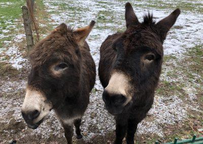 Esel Winnie und Emil