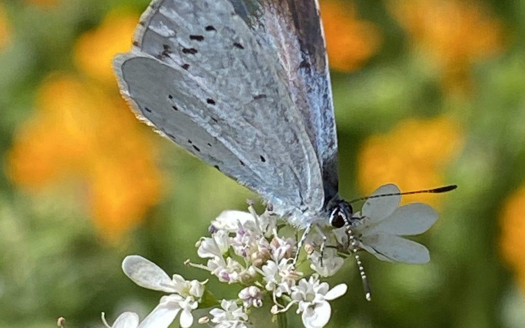 Insektenschutz im Hausgarten